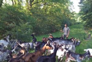 Vincent Gentil et son troupeau de chèvres bio